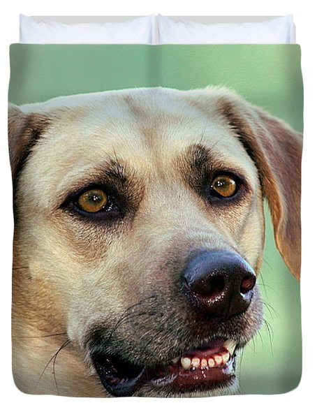 Portrait Of A Yellow Labrador Retriever Duvet Cover