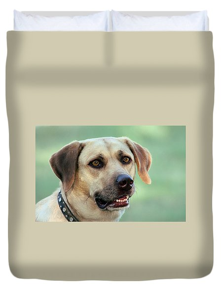 Portrait Of A Yellow Labrador Retriever Duvet Cover by Sheila Brown