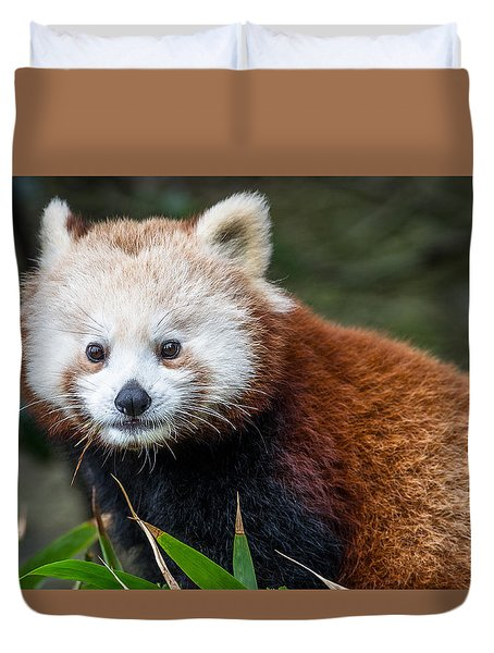 Portrait Of Cini The Red Panda Duvet Cover