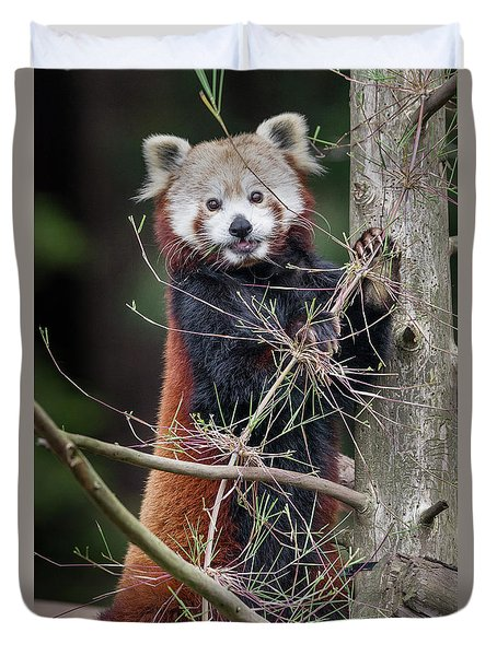 Portrat Of A Content Red Panda Duvet Cover