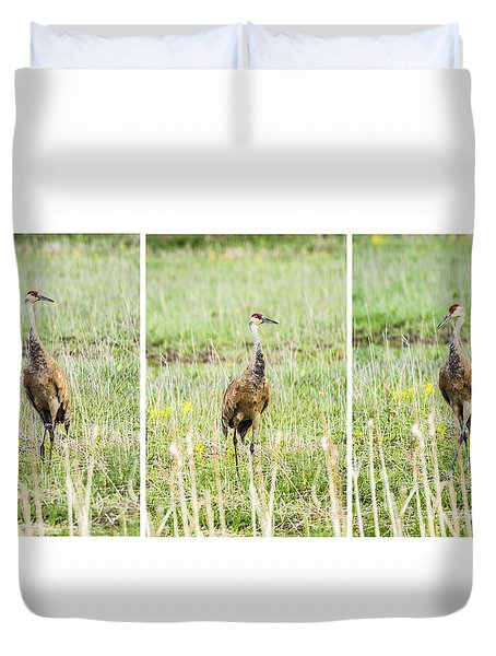 Duvet Cover featuring the photograph Posing Sand Hill Crane by Daniel Hebard