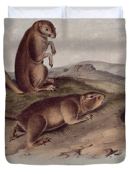 Prairie Dog Duvet Cover by John James Audubon