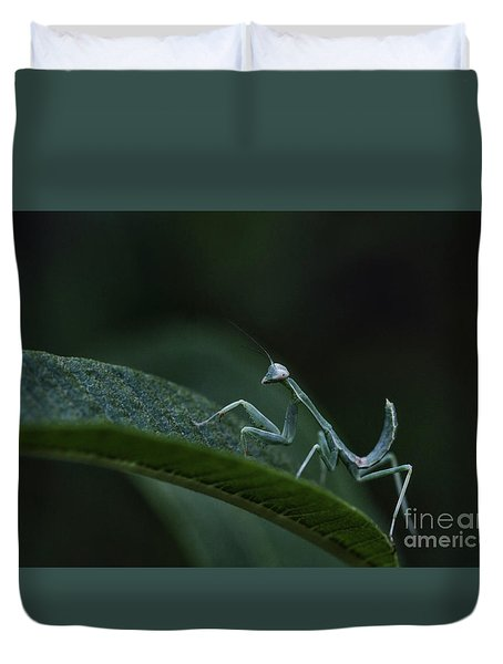 Praying Mantis Baby  Duvet Cover by Ruth Jolly