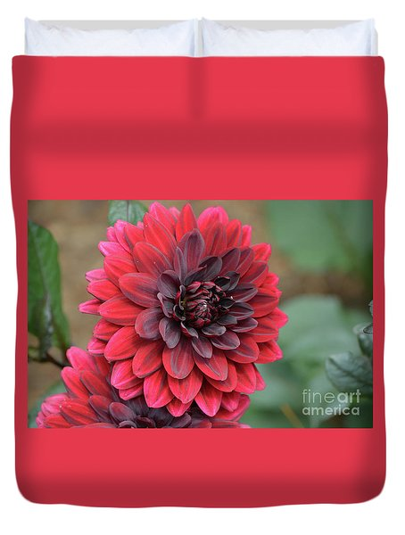 Pretty Blooming Red Dahlia Flower Blossom Duvet Cover