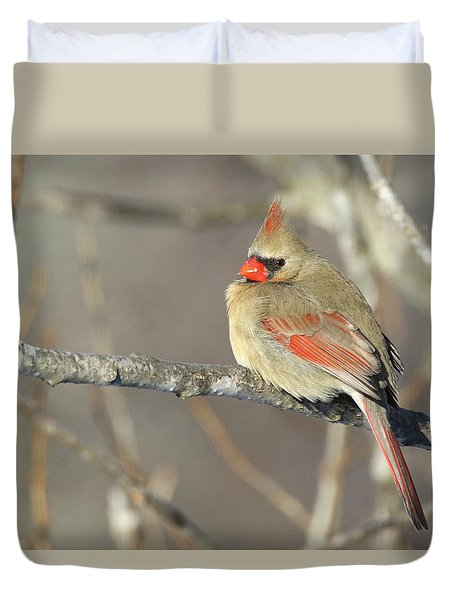 Pretty Female Cardinal Duvet Cover by Brook Burling