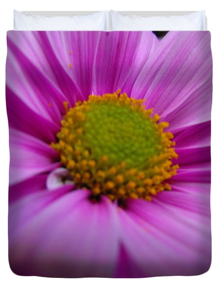 Pretty In Pink Chrysanthemums   Duvet Cover