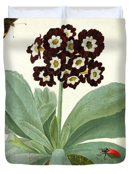 Primula Auricula With Butterfly And Beetle Duvet Cover