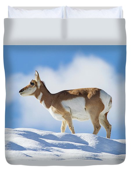 Pronghorn Doe On Snowy Ridge Duvet Cover