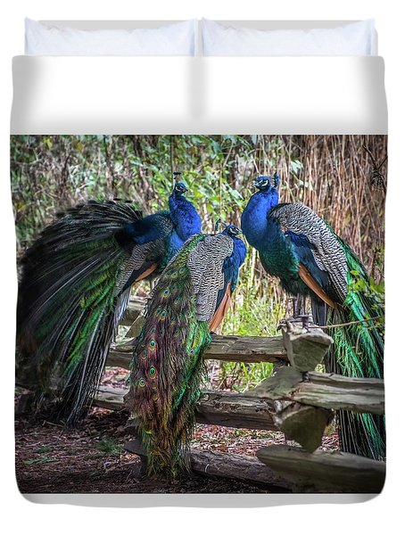 Proud As Three Peacocks Duvet Cover by Keith Boone
