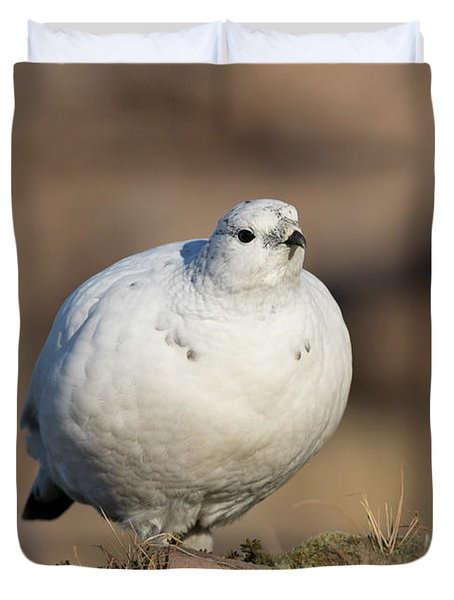 Ptarmigan Going For A Stroll Duvet Cover