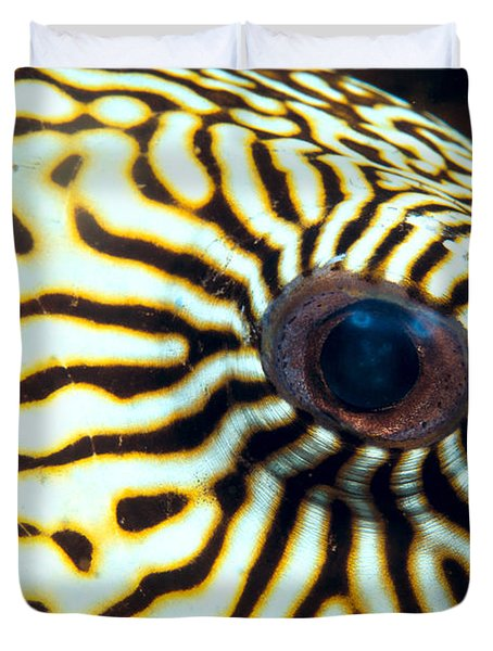 Pufferfish Duvet Cover by Dave Fleetham - Printscapes