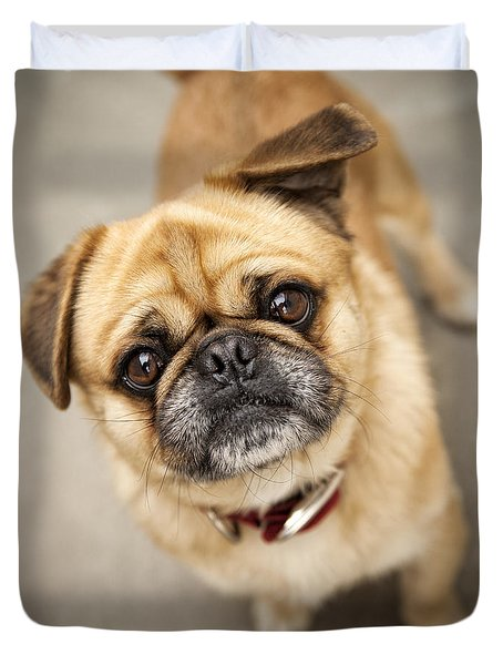 Pug Dog 2 Duvet Cover by Mike Santis