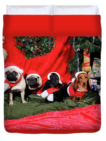Pugs And Dachshounds Dressed As Father Christmas Duvet Cover