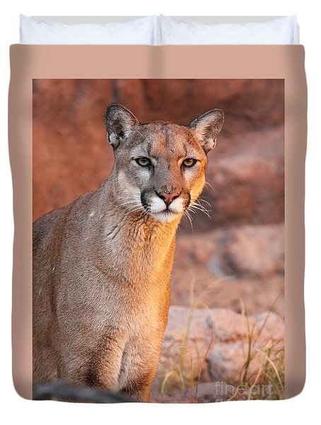 Duvet Cover featuring the photograph Puma At Sunset by Max Allen