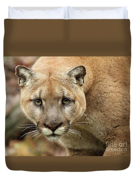 Puma Male Approaching Duvet Cover