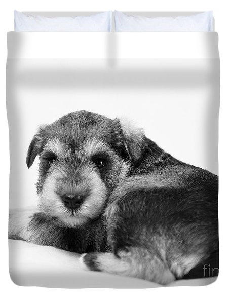 Puppy 3 Duvet Cover