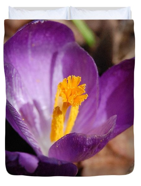 Purple Crocus Duvet Cover by David Lane