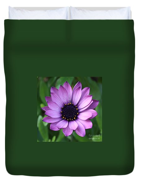 Purple Daisy Square Duvet Cover