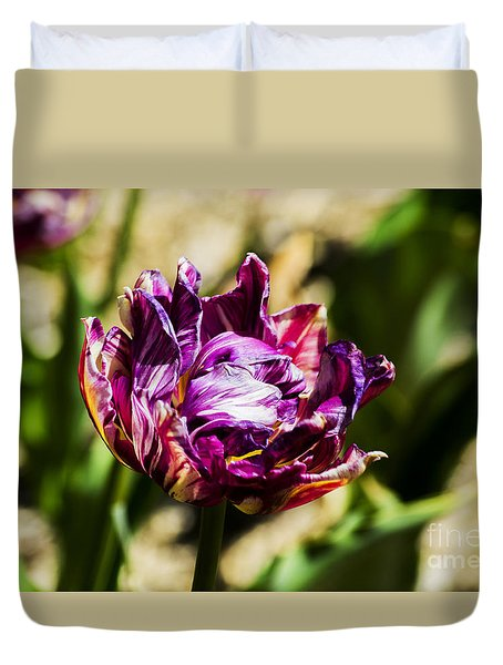 Duvet Cover featuring the photograph Purple Striped Tulip by Angela DeFrias