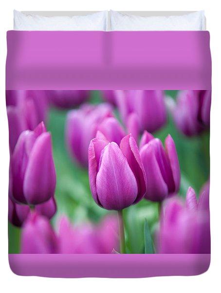 Purple Tulips Of Keukenhof Duvet Cover by Jenny Rainbow
