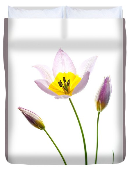 Purple Yellow Tulip 1 Duvet Cover