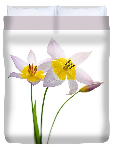 Purple Yellow Tulips 1 Duvet Cover by Rebecca Cozart