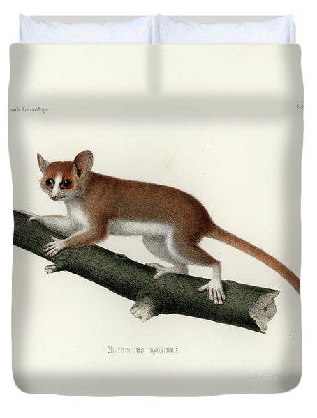 Pygmy Mouse Lemur Duvet Cover