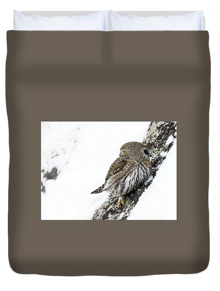 Pygmy Owl Duvet Cover