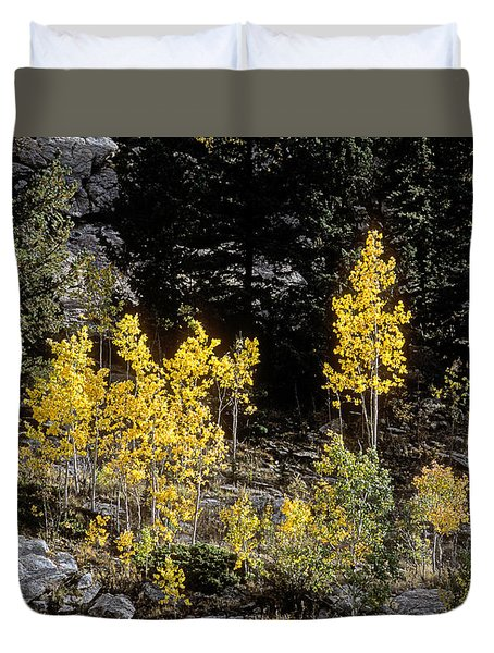 Aspens In Fall At Eleven Mile Canyon, Colorado Duvet Cover