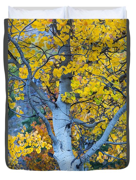 Duvet Cover featuring the photograph Quaking Aspen by Gary Lengyel