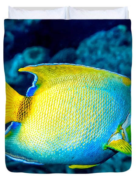 Queen Angelfish II Duvet Cover