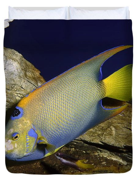 Queen Angelfish Duvet Cover by Sally Weigand
