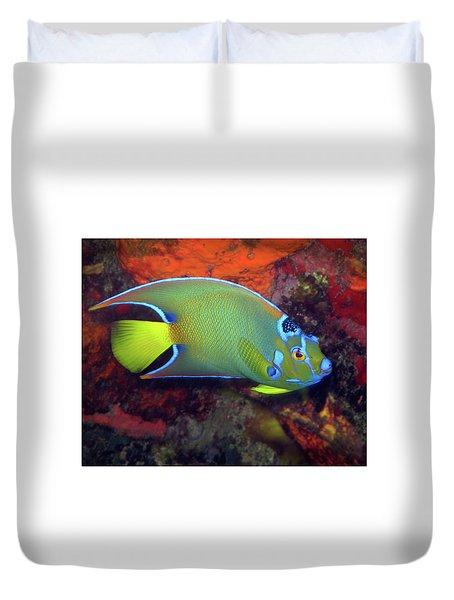 Queen Angelfish, U. S. Virgin Islands 2 Duvet Cover