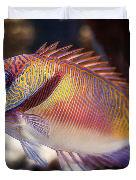 Rabbitfish Duvet Cover