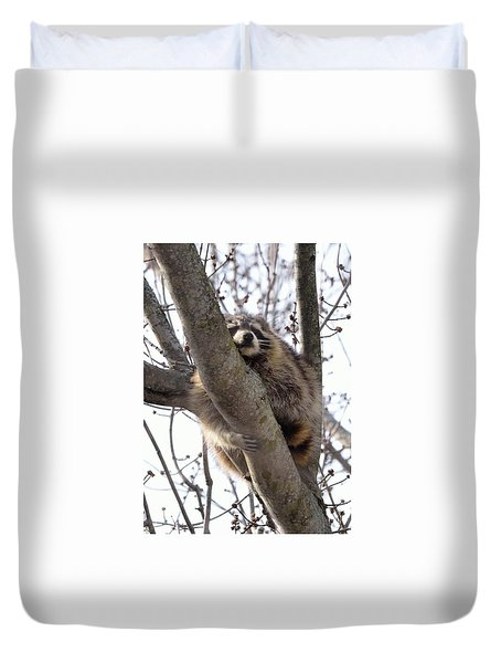 Afternoon Nap-raccoon Up A Tree  Duvet Cover