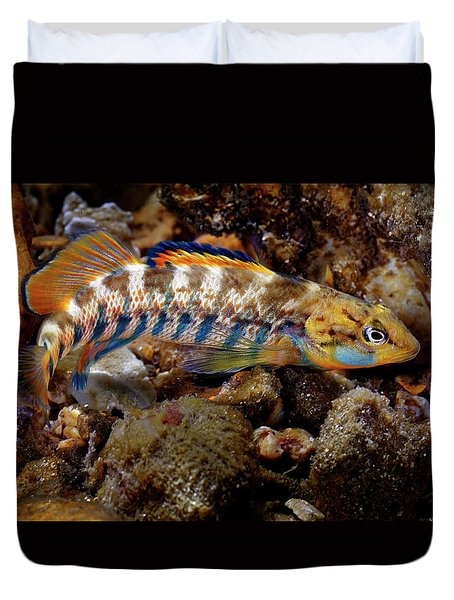 Rainbow Darter Duvet Cover
