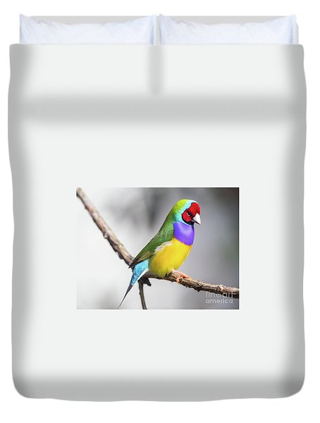 Rainbow Finch Duvet Cover
