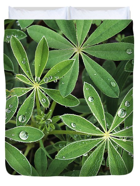 Raindrops On Lupine Duvet Cover by Greg Vaughn - Printscapes