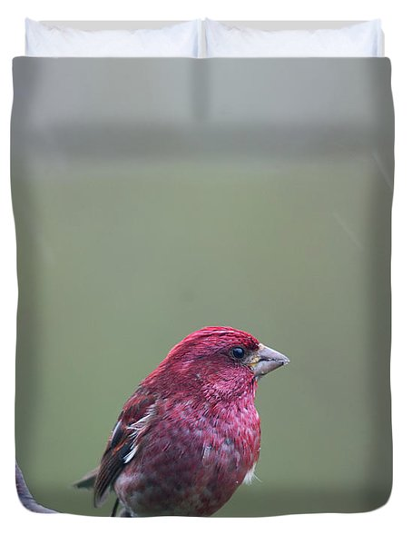 Duvet Cover featuring the photograph Rainy Day Finch by Susan Capuano