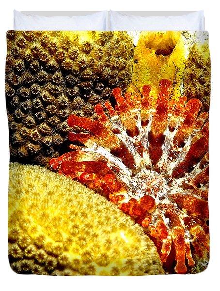 Rare Orange Tipped Corallimorph - Fire In The Sea Duvet Cover