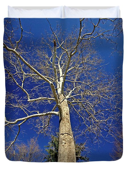 Duvet Cover featuring the photograph Reaching For The Sky by Suzanne Stout