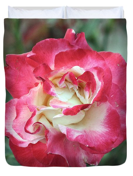 Red And White Rose Duvet Cover