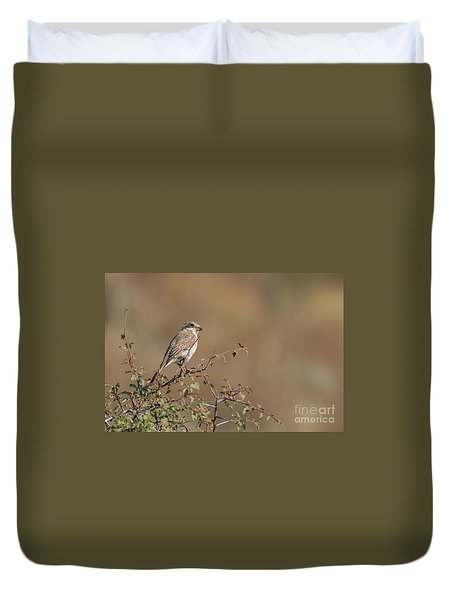 Red-backed Shrike Juv. - Lanius Collurio Duvet Cover
