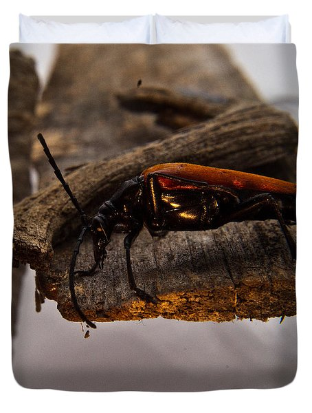 Red Beetle At Twlight Duvet Cover