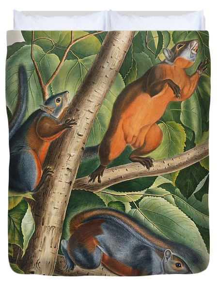 Red Bellied Squirrel  Duvet Cover by John James Audubon