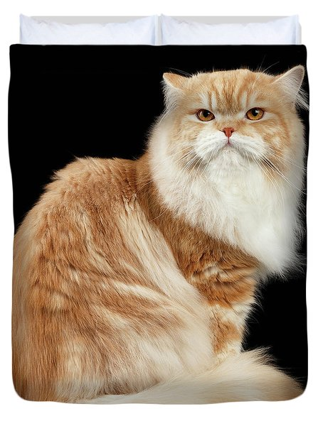 Red Big Adult Persian Cat Angry Sits And Turned Back On Black  Duvet Cover