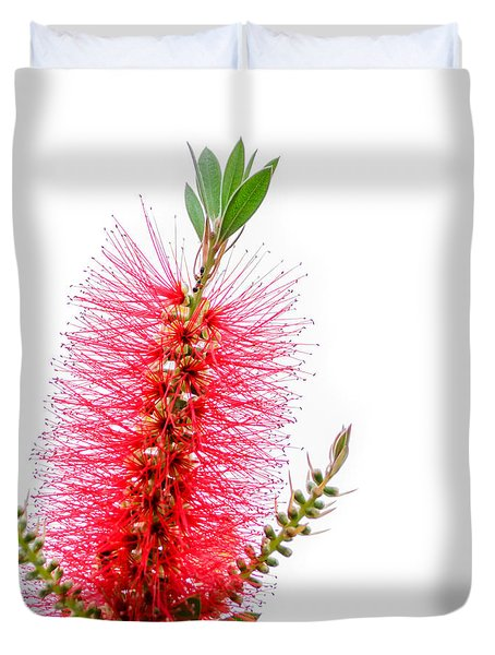 Red Bottle Brush Against An Overcast Sky Duvet Cover by Debra Martz