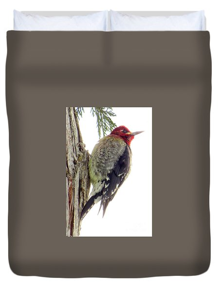 Red-breasted Sapsucker Duvet Cover