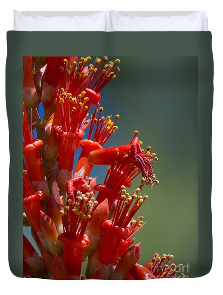 Red Cactus Flower 1 Duvet Cover