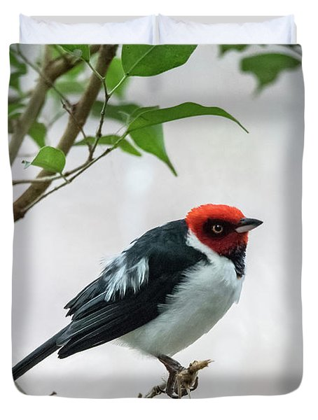 Red Capped Cardinal 2 Duvet Cover